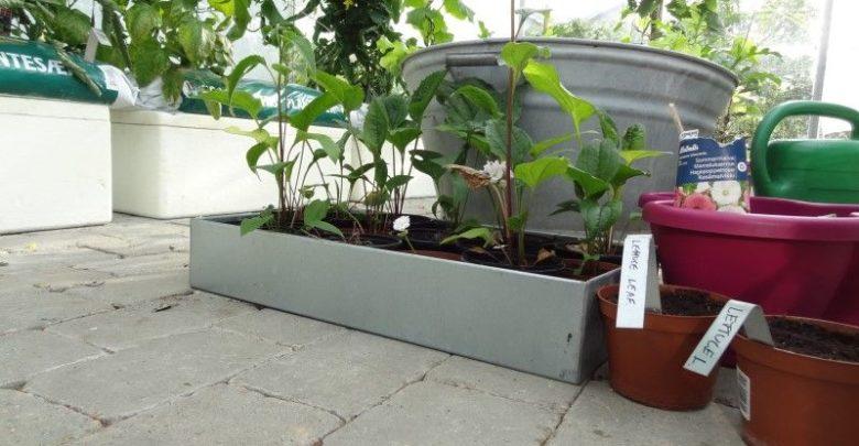 Photo of Prøv med nye smarte plantekasser i haven