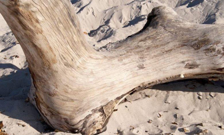 Photo of Drivtømmer fra stranden